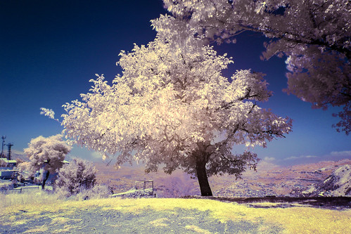 pink blue lebanon white tree nature grass leaves yellow photoshop canon landscape jack photography 7d infrared arz cedars arez seikaly jrseikaly
