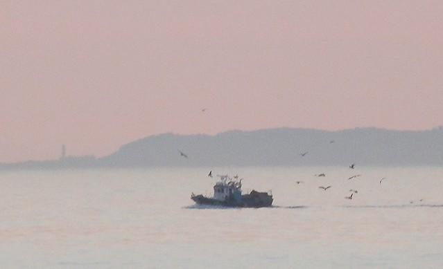 Pesquero y sus gaviotas