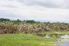 Inauguración Sendero Los Caimanes, La Segua