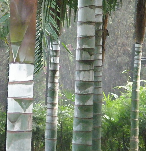 Palm Trunk Abstract in South-East Asia