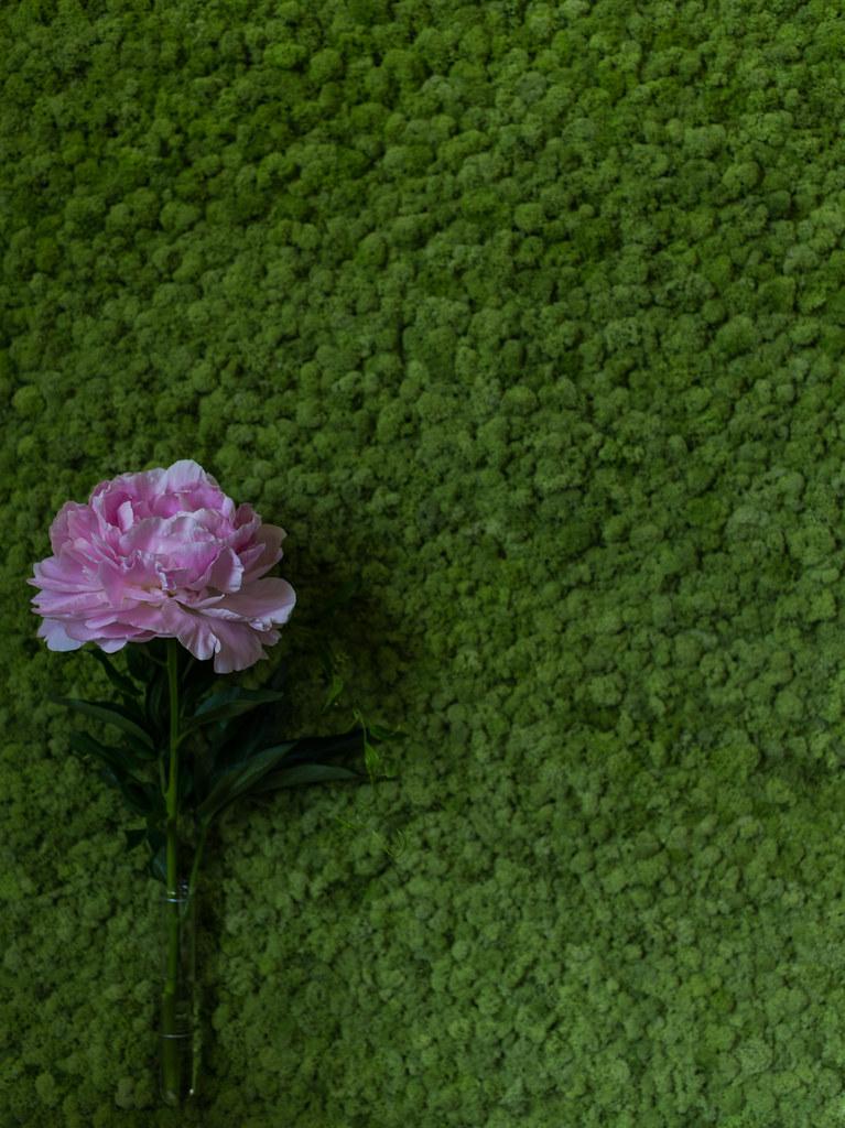 花と器のハーモニー2015③