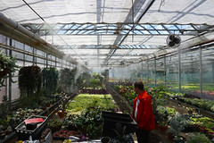 Visiting the High Park Greenhouses