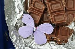 Šokolaadiliblikas