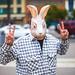 Peace Rabbit