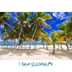 La désirable Plage à Fifi #Guadeloupe #desirade #promoguadeloupe #Vwalovan2015 #plage #dream  #ig_caribbean #love_caribbeanSea #love_caribbeanSea #cocotier
