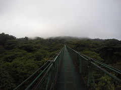 The Cloudforest