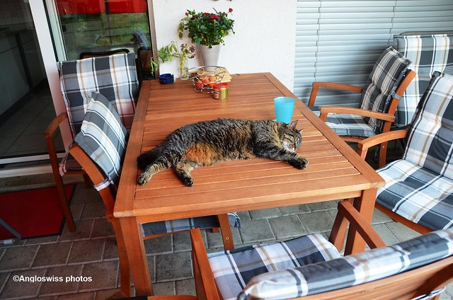 Tabby relaxing on the table on the porch 3