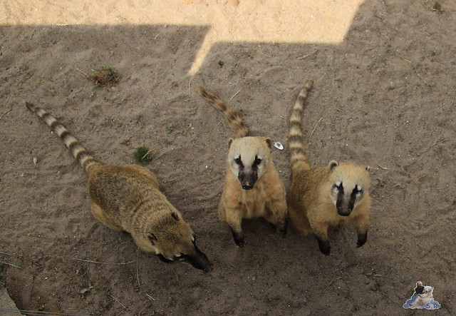 Tierpark Krüzen 03.07.2015  4