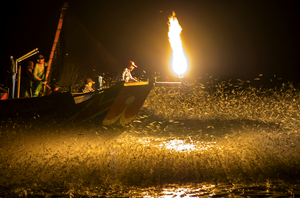 竹崙溪&蹦蹦魚&野柳漁港
