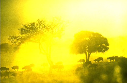 Africa in Yellow.jpg by SteveMcN