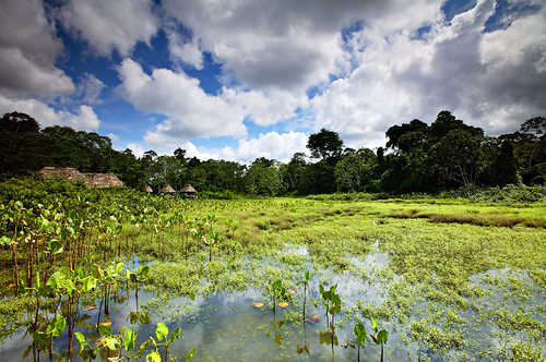 travel blue sky green nature water topv111 clouds forest canon wow landscape eos ecuador amazon rainforest gutentag lagoon explore jungle 5d davele 1635mmf28l kapawi