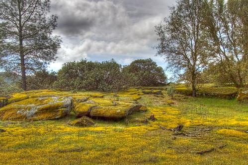 california flowers foothills northerncalifornia yellow landscape moss interestingness spring sierra lichen hdr highdynamicrange mypick sdosremedios stevendosremedios nikonstunninggallery size2x3 wiredeye