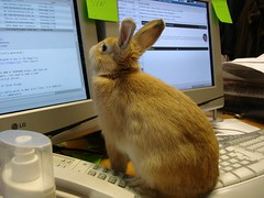 Techie Bunny keeping your servers serving