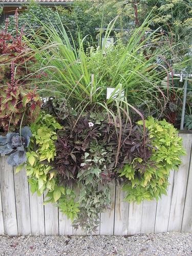 giardinaggio piante da ombra