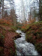 rushing creek and fallen leaves   dscf3416