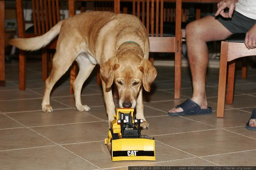 jed inspects the bulldozer