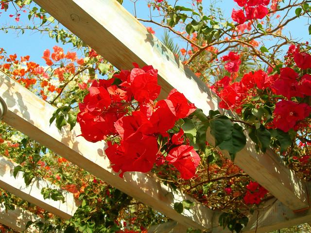 Flowers in Sheraton Miramar Resort El Gouna, Hurghada - Egypt