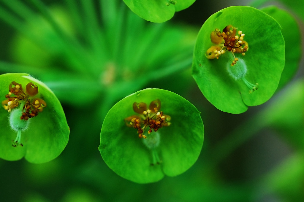 GREEN FLOWERS NAMES