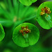 Green Flowers by Giovanni88Ant
