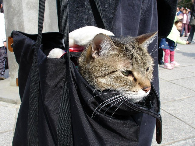 Chibi-the-Cat in a carry-bag at Kamakura