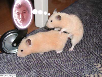 porr hamster