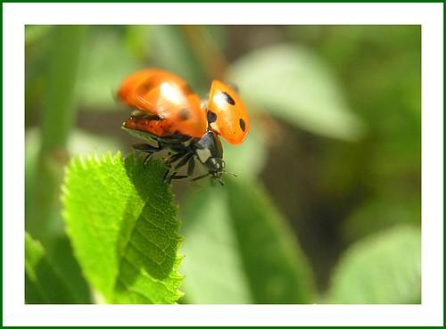 Start - ladybird