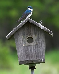 animal(1.0), wing(1.0), birdhouse(1.0), fauna(1.0), bird feeder(1.0), bluebird(1.0), beak(1.0), bird(1.0),