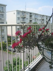 flower, fence, handrail, property, residential area, facade, apartment, balcony,