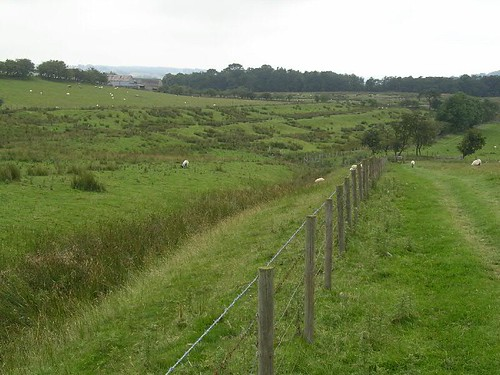 The Turf Wall and ditch near Milecastle 50 TW
