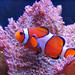 for a clown fish, he's not that funny
