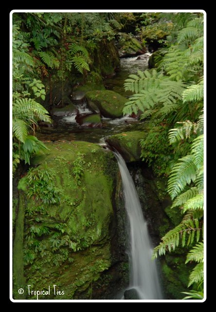 Dominica waterfalls http www flickr com photos tropicallytied