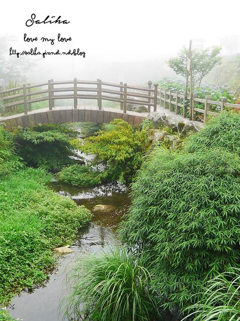 陽明山竹子湖景點 (3)