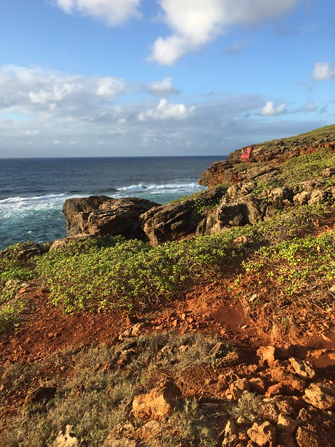 Running in Kauai #shirleyruns