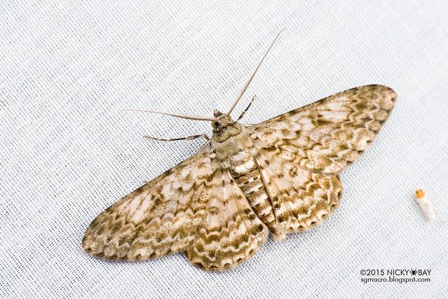 Moth - DSC_4684