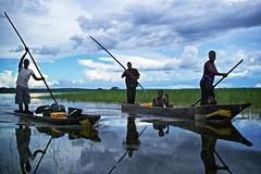 Zambian men rowing on  pirogue, Lealui Island, Barotseland, Zambia