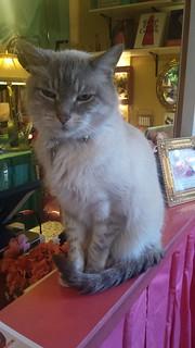 Vincent at Pretty Parlor
