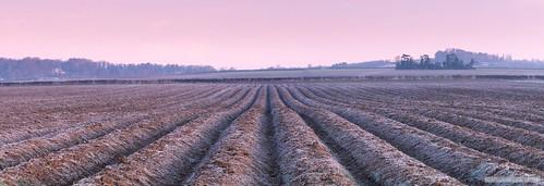 stapleford england unitedkingdom sunrise dawn frost fields cambridge panoramic panorama landscape