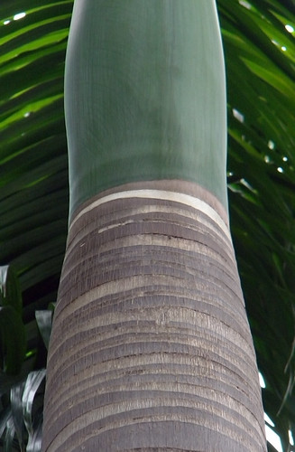 Palm Trunk Abstract in Singapore
