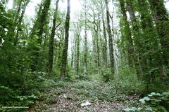 森の高い歌 - Il canto alto del bosco
