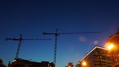 DC Dance of the Cranes 59111