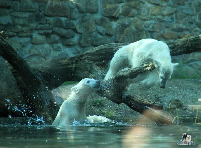 ouwehands dierenpark 30.06.2015  67