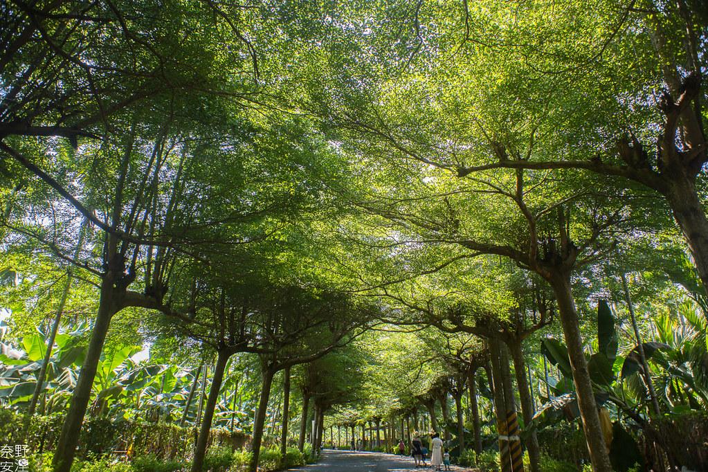 潮洲泗林綠色隧道 (1)
