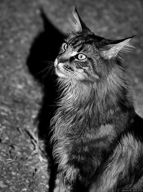 Bonbon noir ... 20051906430_550a466071_c