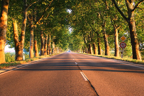 trees light sunset red summer sun color tree green nature beautiful digital canon eos nice colorful hungary pavement route planes 70d