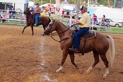 rodeo(0.0), western riding(0.0), team penning(0.0), western pleasure(0.0), pack animal(0.0), jockey(0.0), barrel racing(0.0), animal sports(1.0), equestrianism(1.0), racing(1.0), mare(1.0), equestrian sport(1.0), sports(1.0), horse(1.0), traditional sport(1.0),