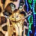 Chinese kunstenaars verlichten Antwerpse Zoo