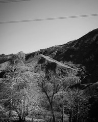 Little Tujunga Canyon Burn Area So many levels of gray in this simple shot. Trying to expose properly for both the shadow and the sunlight was very difficult. #landscape #nature #outdoors #mountains #tree #LA #losangeles #ig_losangeles #wheream_I_LA #inst