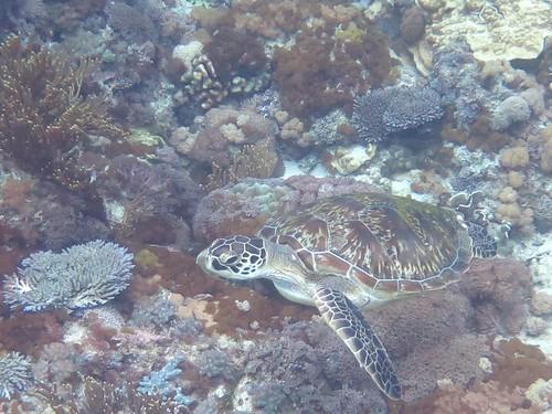 海龜(蕭伊真提供)
