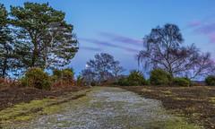 Rockford Moonrise