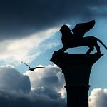 Venecia y las Gaviotas: el Arte de Volar